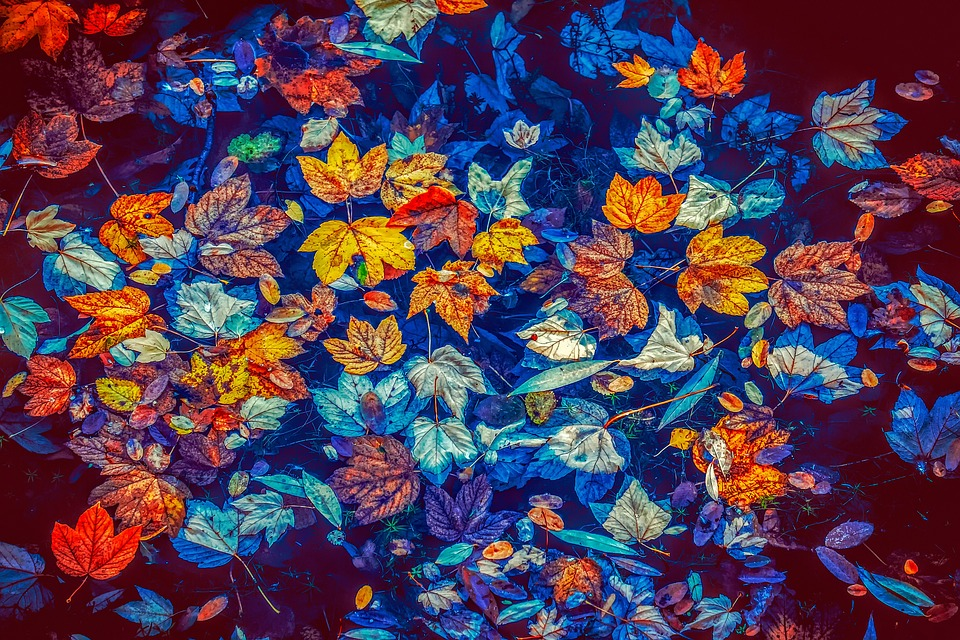 Fall Leaves, Water, Nature, Leaves, Colorful