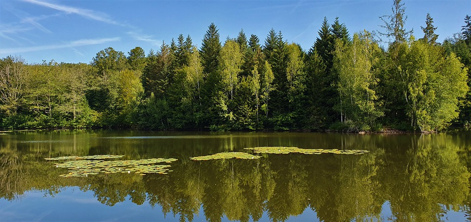 Pond, Lake, Forest, Nature, Water Lilies, Reflections
