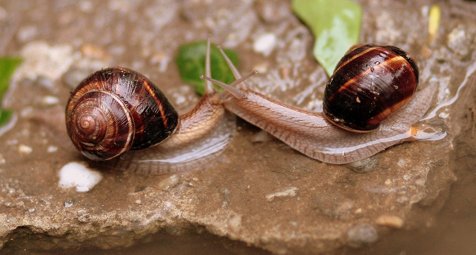Snails, Pair, Love, Water, Wet, Shell