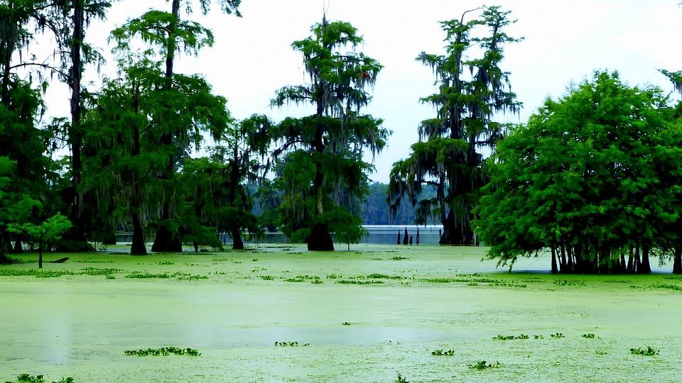 Bayou, Morning, Marsh, Louisiana, Water, Wild, Nature