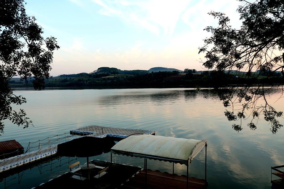 Water, Agua, Nature, Lake, Summer, Tree, Swim