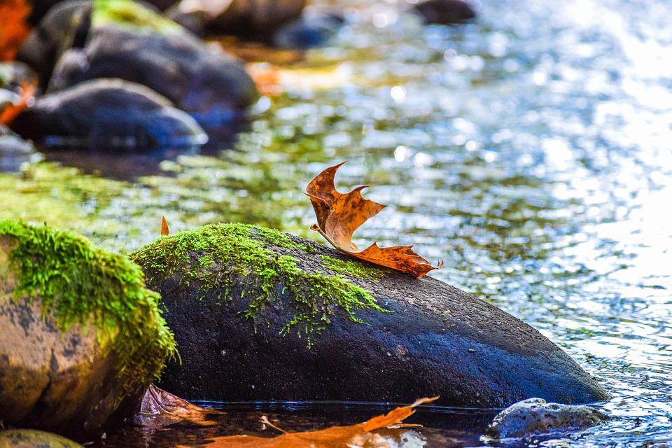 River, Autumn, Leaf, Water, Nature, Foliage, Autumnal