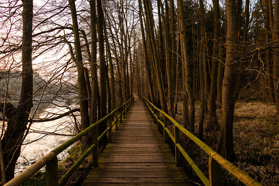 Bridge, Lake, Forest, Nature, Water, Trees