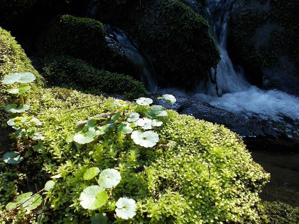 Bach, Nature, Environment, Mood, Water, Green, Habitat