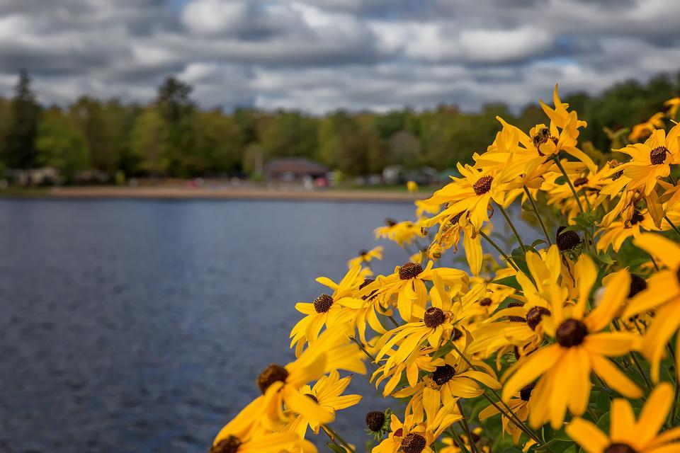 Flowers, River, Nature, Summer, Water, Landscape, Blue