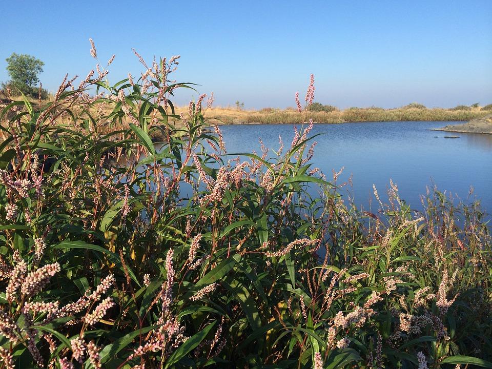 Nature, Water, Landscape, Flora, Summer