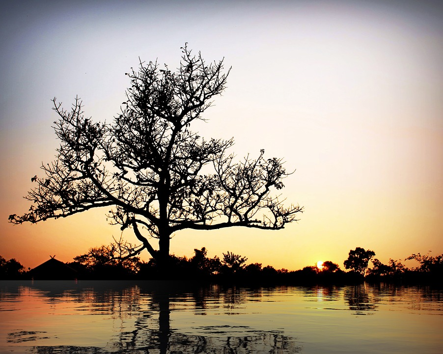 Tree, Reflection, Water, Nature, Landscape, Sky, Sunset