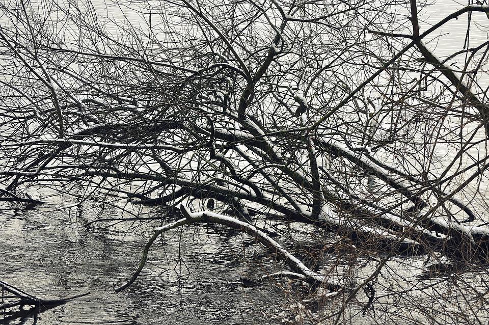 Tree, Water, Lake, Nature, Landscape, Winter, Snow