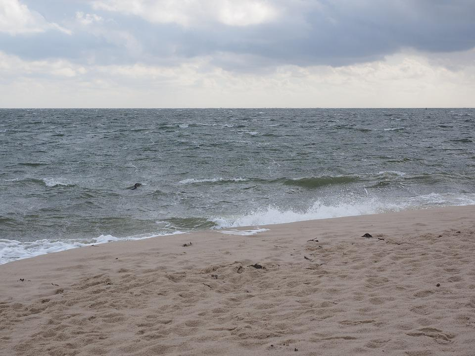 Sea, Water, Sylt, Elbow, Northern Tip, Seal
