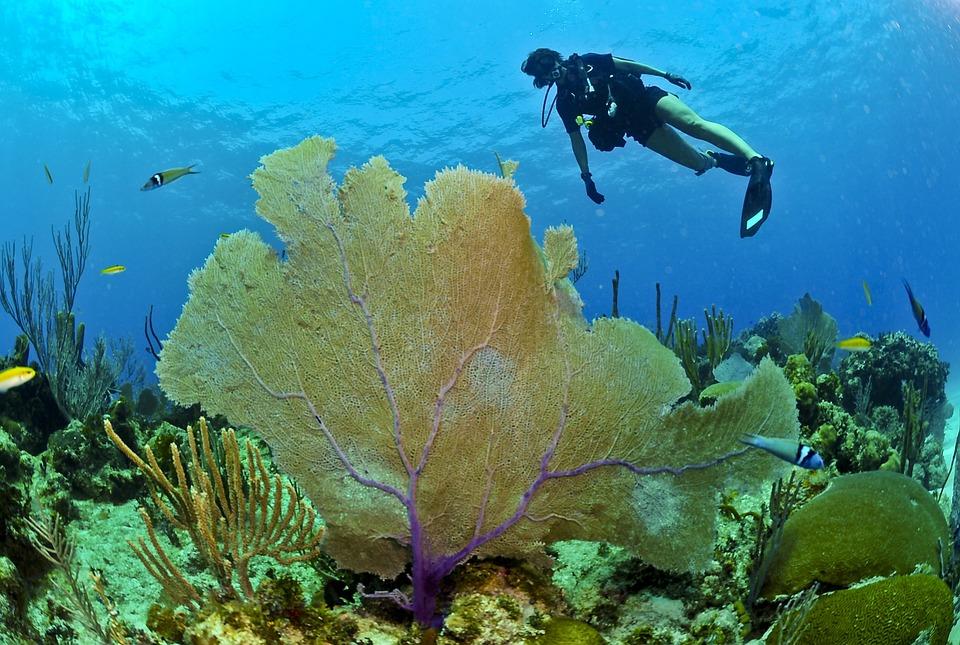 Diver, Diving, Underwater, Sea, Ocean, Water, Deep