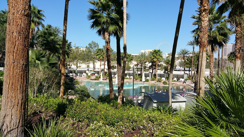 Pool Side, Water, Palm Trees, Las Vegas