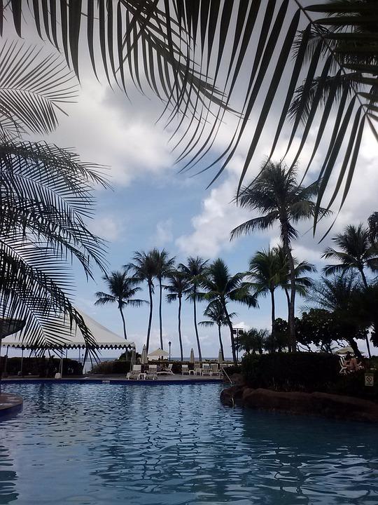 Swimming Pool, Pool, Water, Palms, Guam, Swimming