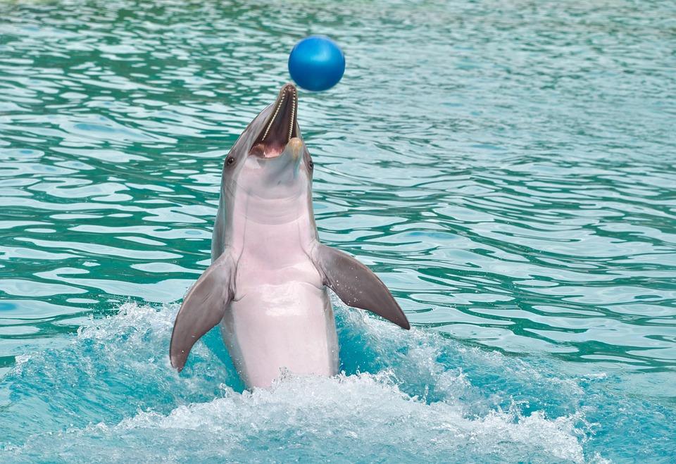Dolphin, Ball, Play, Happy, Water, Marine Mammal