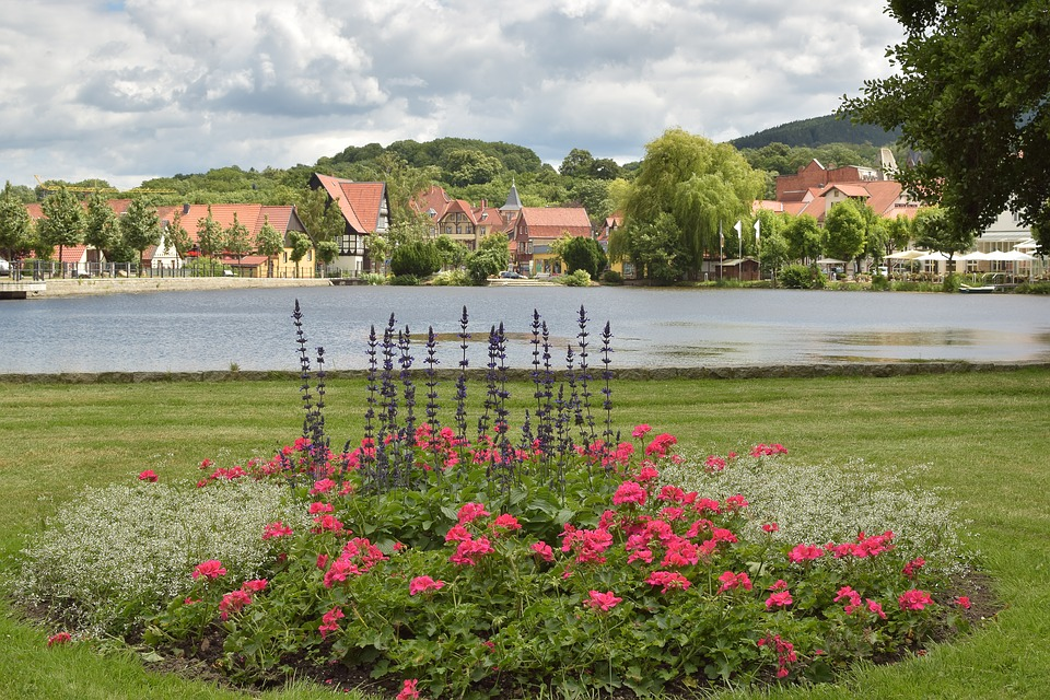 Park, Pond, Water, Flowers, Walk, Green Area, Place
