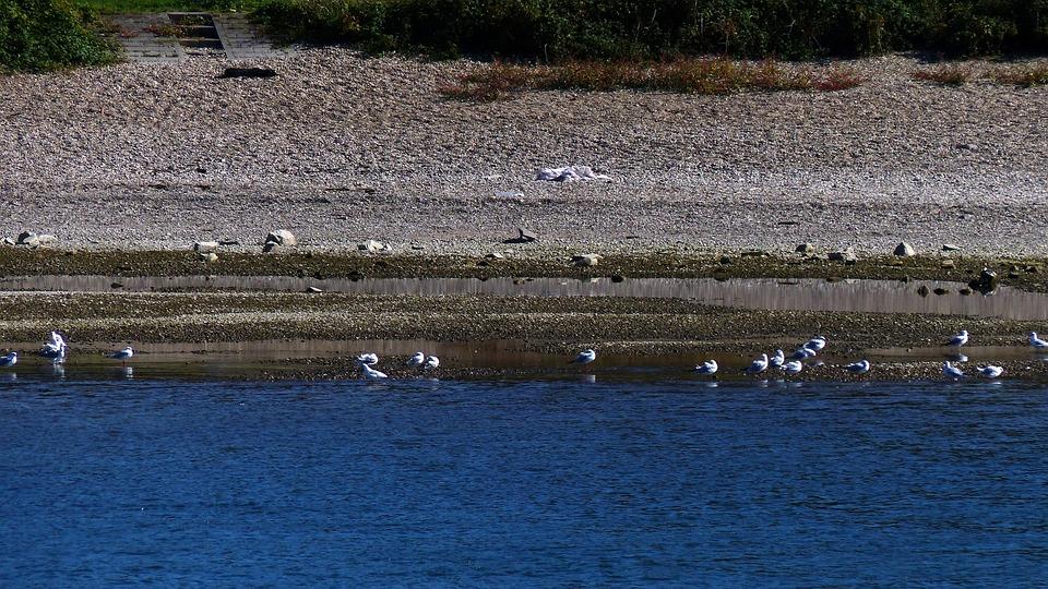Gulls, River, Water, Flight, Port, Boats, Bridges, Nap