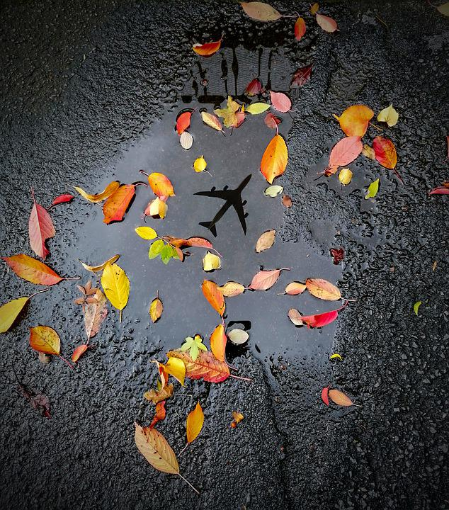 Puddle, Leaves, Autumn, Water, Nature, Reflection