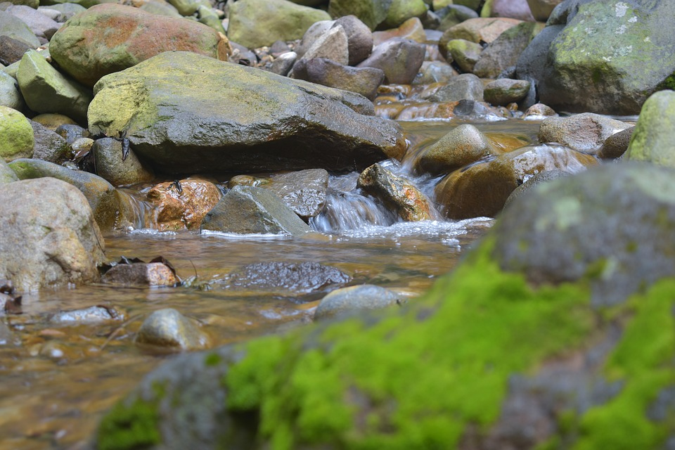 Moss, Creek, Stream, Water, Nature, River, Rock