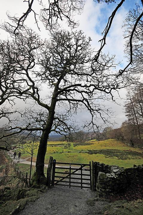 Tree, Gate, Rural, Cumbria, Water, Nature, Landscape