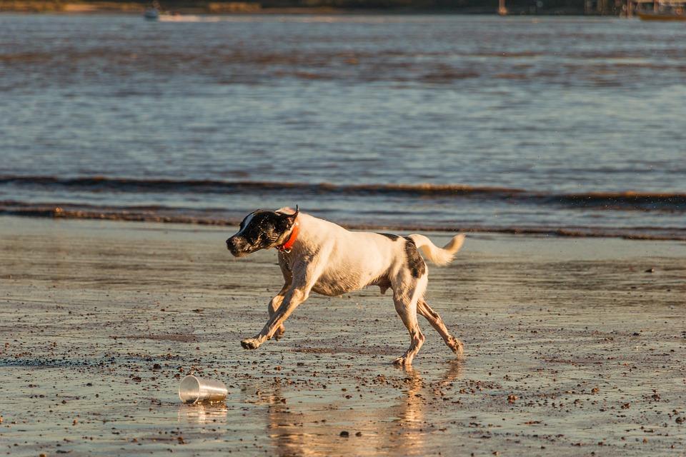 Dog, Beach, Elbe, Water, Animal, Sand, Sea, Most Beach