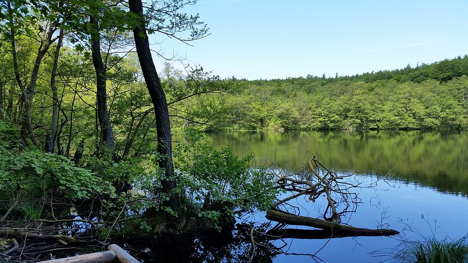 Lake, Landscape, Woods, Water, Nature, Outdoors, Scenic