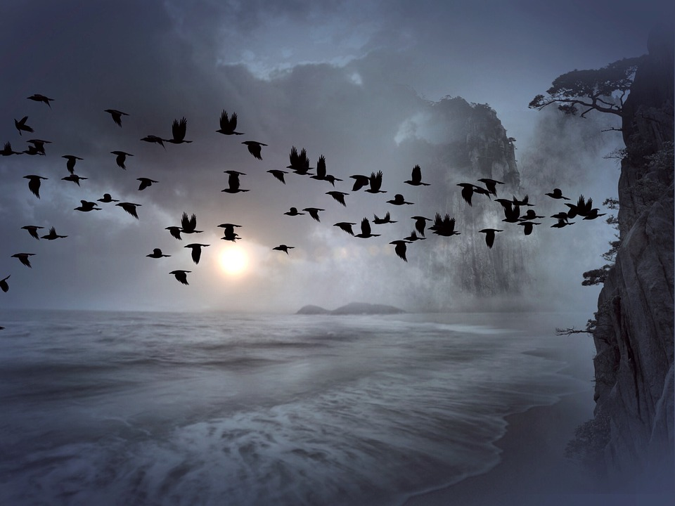 Flock Of Birds, Birds, Swarm, Mountain, Sea, Water