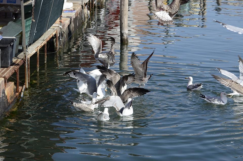 Seagull, Italy, Bird, Water, Animal, City, Seevogel