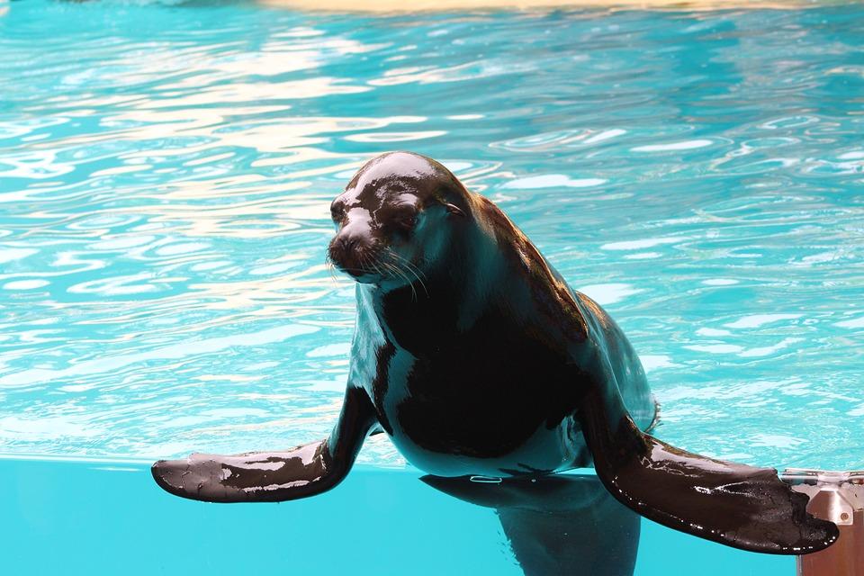 Animal, Seal, Sea Lion, Sea, Mammal, Nature, Water