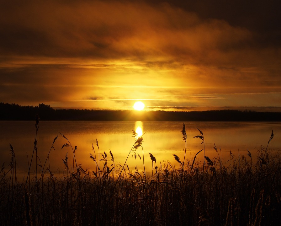 Sun, Rushes, Morning, Sky, Water, Nature, Lake, Scenic