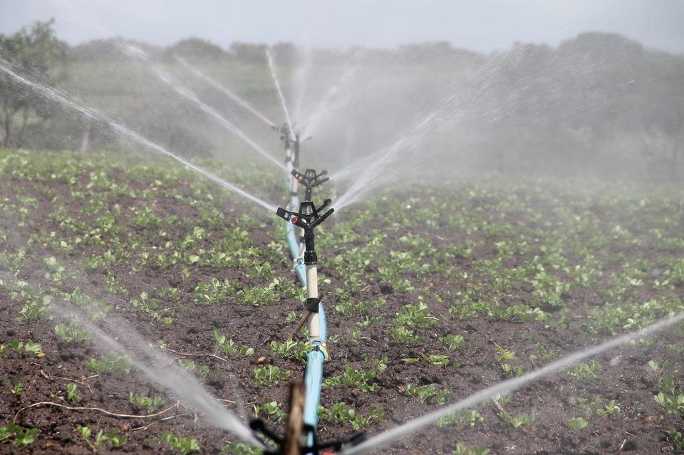 Irrigation, Agriculture, Sprinkling, Peanut, Water