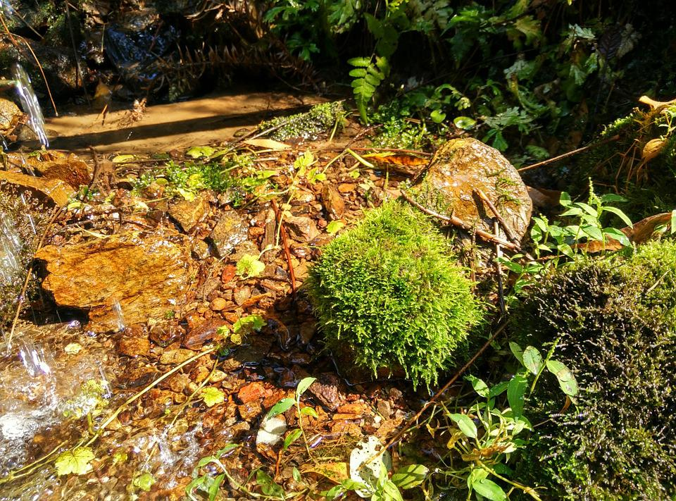 Creek, Moss, Running Water, River, Water, Streams
