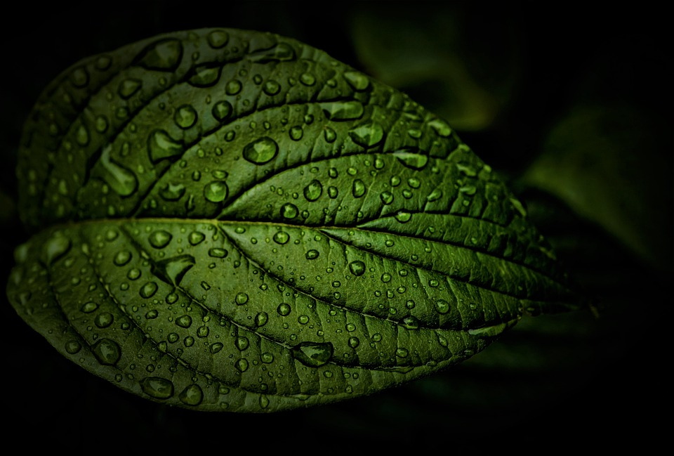 Leaf, Rain, Weather, Rainy Weather, Wet, Water, Summer
