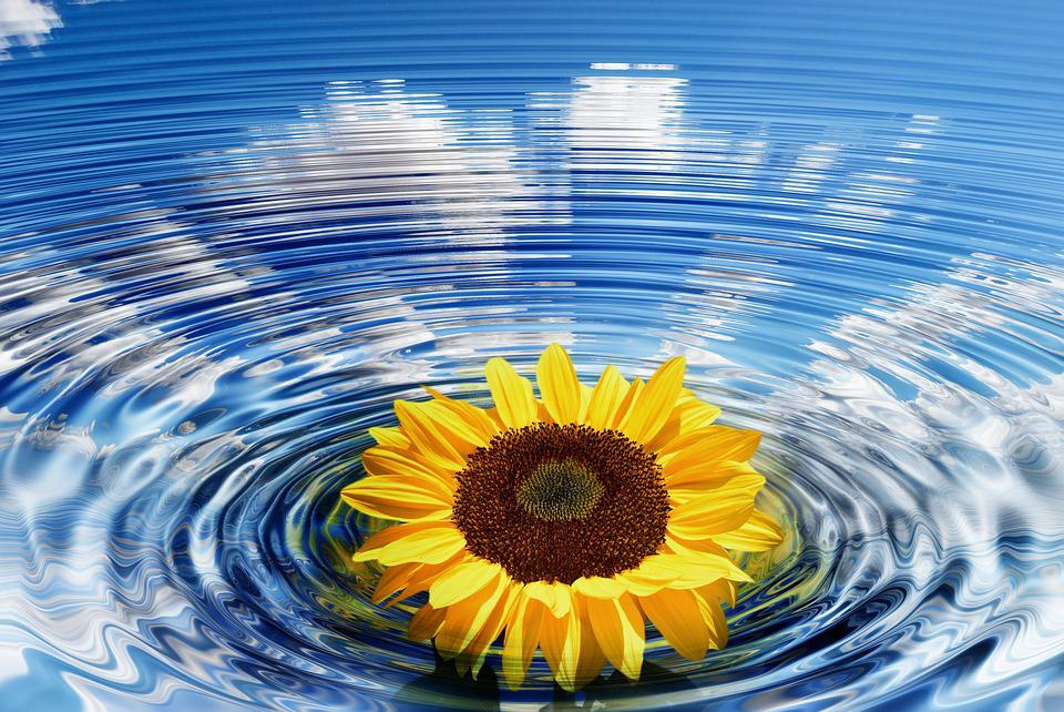 Wave, Sunflower, Concentric, Waves Circles, Water