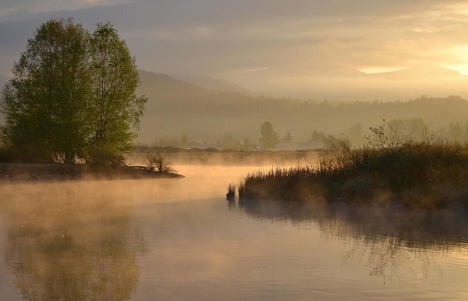 Morning, Sunrise, Trees, Water, Pastel, Weeds