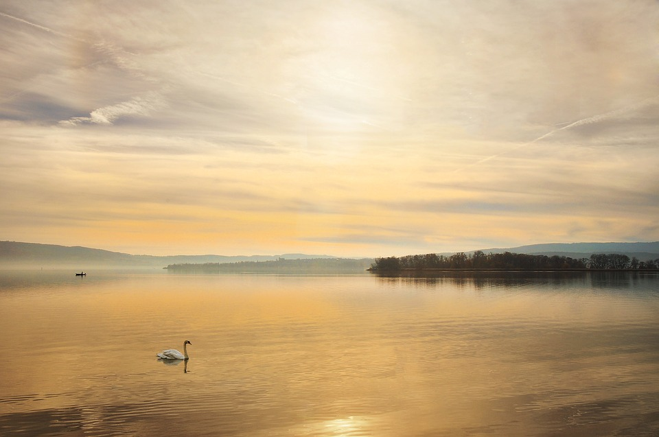 Swan, Lake Constance, Lake, Sunset, Water, Landscape