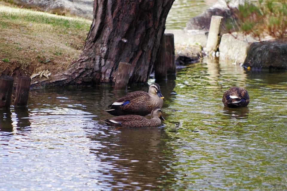 Waterfowl, Natural, Lake, Water, Water Surface, Light
