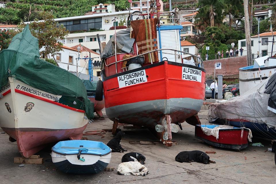 Madeira, Transportation System, Water, Industry, Travel