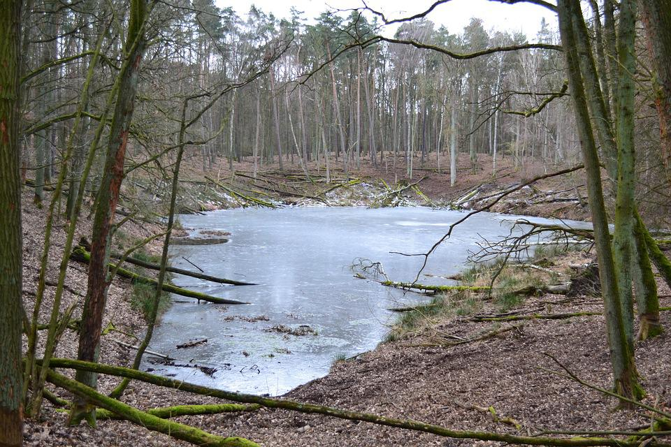 Forest, Water, Nature, Green, Tree, Lake, Plants