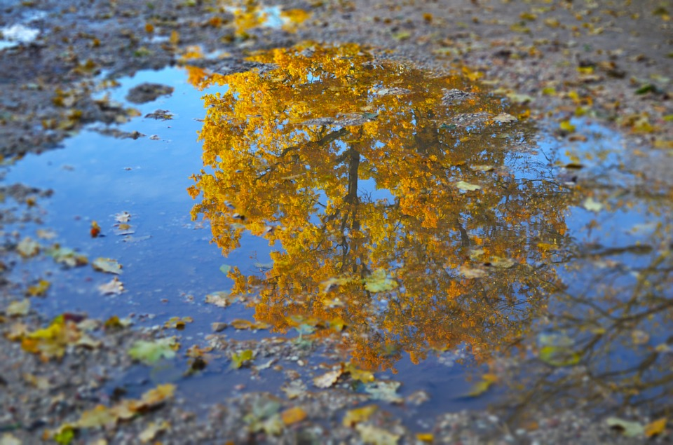 Nature, Fall, Water, Tree, Landscape, Reflection