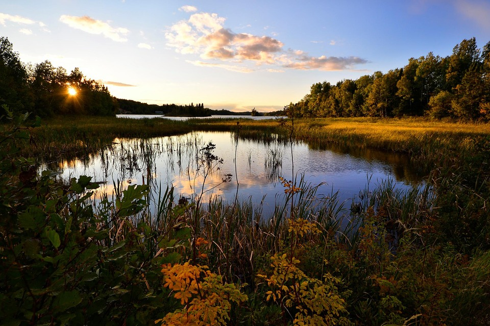 Landscape, Water, Lake, Nature, Marsh, Trees