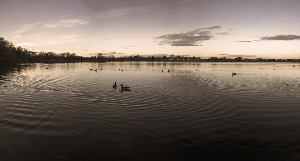 Trench Pool, Ducks, Lake, Water, Telford, Shropshire
