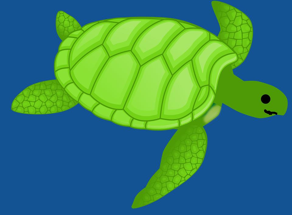 Turtle, Green, Swimming, Water, Sea