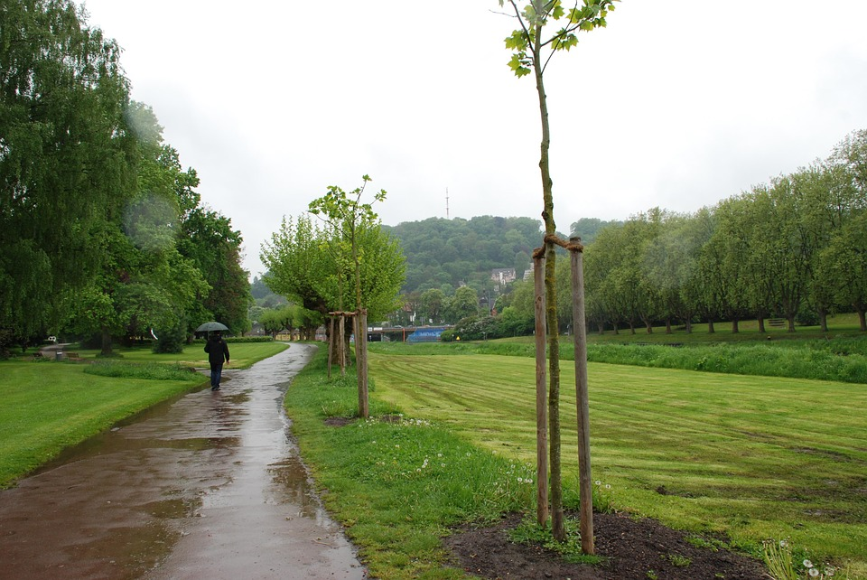 Rain, Umbrella, Water, Wet, On The Staden, Trees