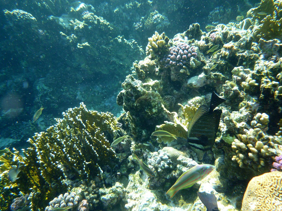 Underwater, Sea, Fish, Coral, Sea Animal, Water, Divers