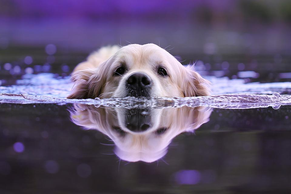 Dog, Water, Wet, Animals, Animal, Nature, Summer