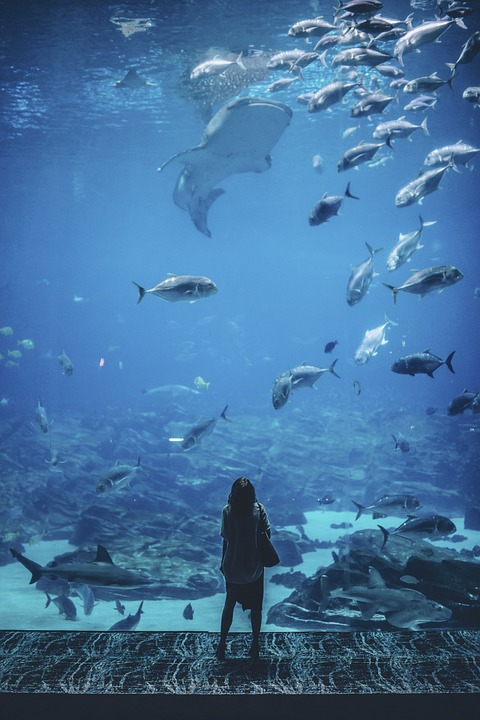 Nature, Water, People, Woman, Fish, Blue, Wonder, Alone