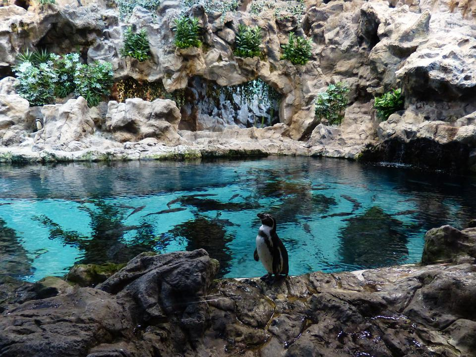 Penguin, Wait, Zoo, Enclosure, Water, Penguin Pool