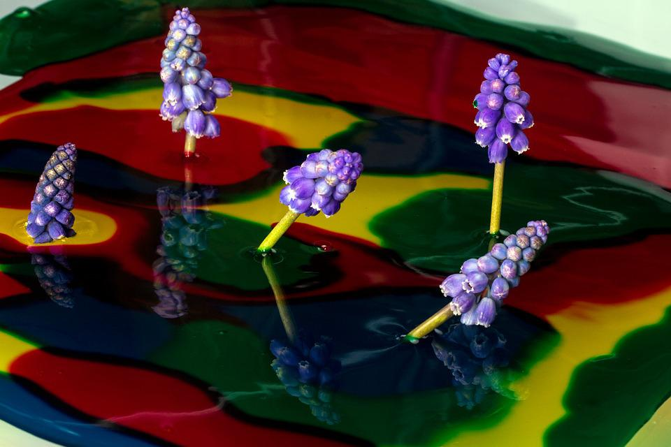 Color, Watercolor, Perl Hyacinth, Close, Mirroring