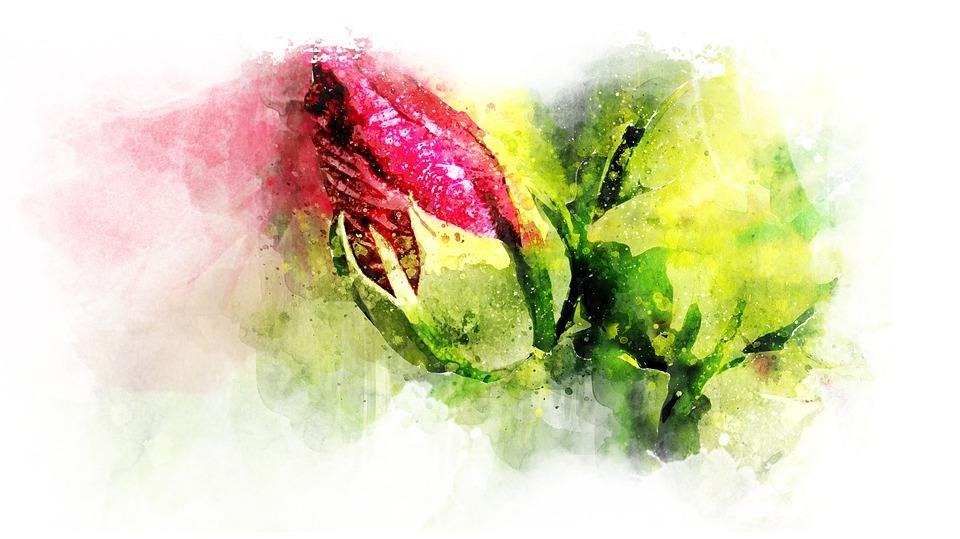 Flower, Colorful, Watercolor, Floral, Nature, Color