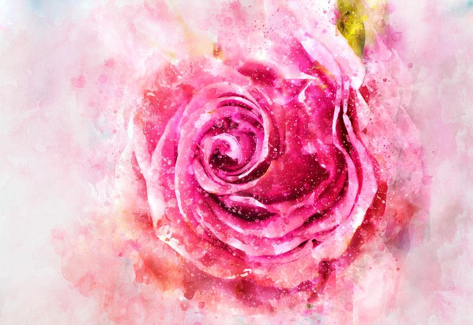 Rose, Watercolor, Pink, Bouquet, Decoration, Curl