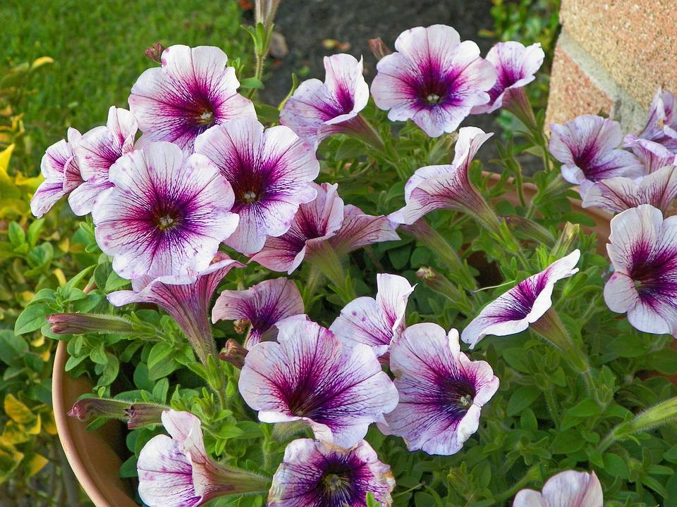 Watercolor Purple Hibiscus, Purple, Flowers, Floral